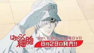 Cells at Work! video 5