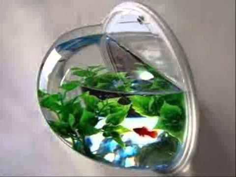 Wall Mounted Betta Fish Tanks Wall Mount Hanging Beta Fish