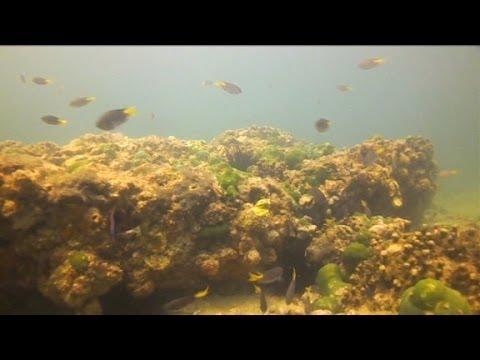 Saving Pakistan's coral reefs