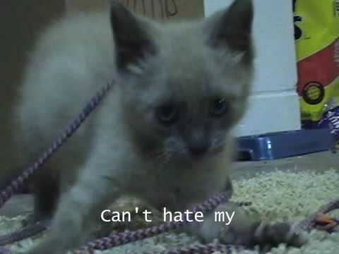 Lady Gaga parody: Kitty Gaga - Kitten Face (Poker Face parody) autotune