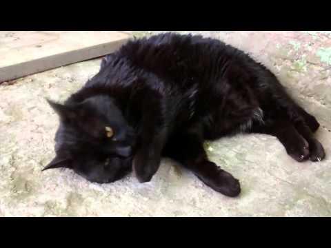 Bart, el gato negro. Filmado con moto g 1era gen