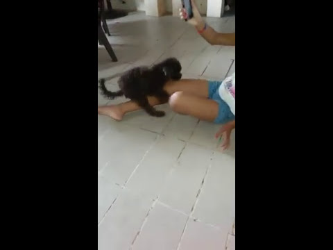 El perro violador  de chicas 😨 thumbnail