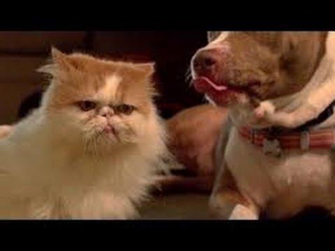 Котэ vs собакен! Видео про животных 2013!