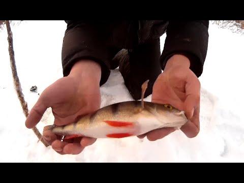 видео подледного лова плотвы