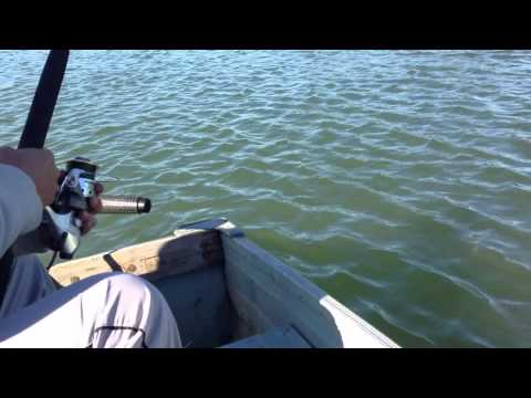 sturgeon fishing on sacramento river  2013