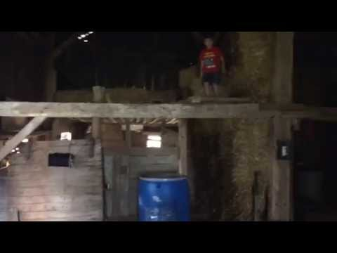 Goat jumping from loft - manly moment