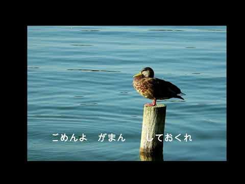 児島のり子「夫婦渡り鳥」You tubuにて配信開始