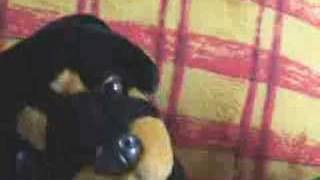 Watch 31 Minutos Doggy Style video