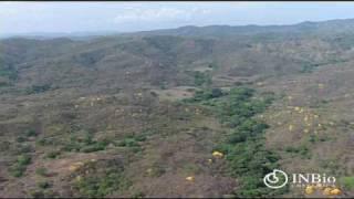 Plantas ornamentales de Costa Rica.mov