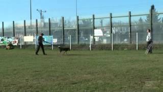Dogteam.pl - Pozytywne Szkolenie Psów, Legnica - Reaktywny Reksio - cz.2