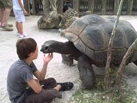 When tortoises ATTACK!!!!