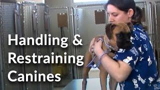 Animal Handling  Part 1