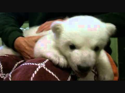 Knut & Friends (part 1)