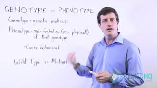 Genotype vs Phenotype