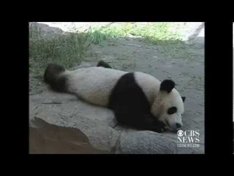 Animals beat the heat at a Chinese zoo