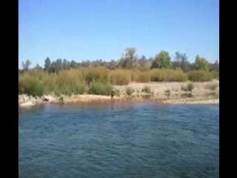 35 inch Chinook salmon and an 18 inch steelhead caught fishing the Yuba River Sept. 2010