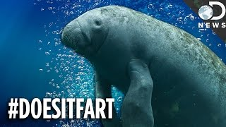 Can You Guess Which Animals Fart (Or Don't)?