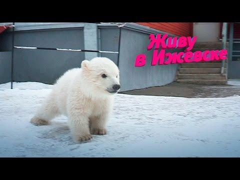Съемки сюжета японцев про медвежат из зоопарка