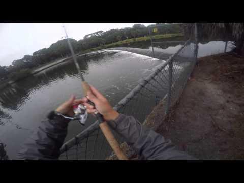 spillway snook fishing