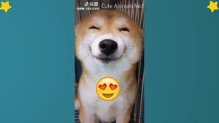 Cute Dogs 🔴 Videos Compilation Cute Moment Of The Animals 🐶 Adorable Dogs