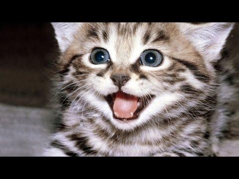 Funny cats   смешные видео приколы!