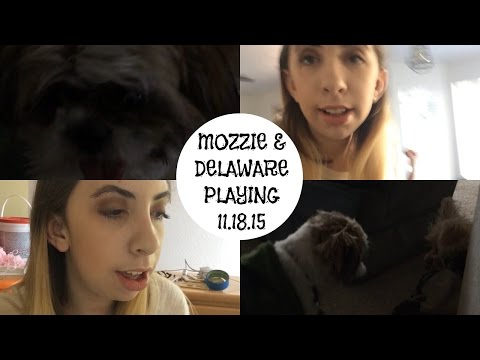 MOZZIE & DELAWARE PLAYING 11.18.15| The Daily Mae