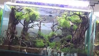 Thăm Bể Cá Khủng - Bể Cá Thủy Sinh - MAH003979