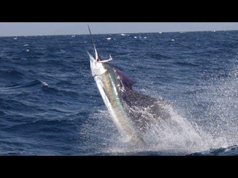 South Florida Sailfish - Fishing