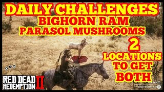 DAILY CHALLENGES BIGHORN RAM PARASOL MUSHROOMS 2 LOCATIONS TO GET BOTH Red Dead Online