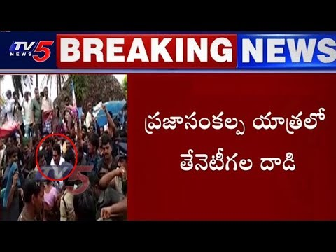 Honey Bee Attack in YS Jagan's Padayatra | TV5 News