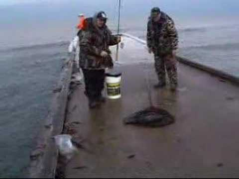 Pier fishing nice catch of the day youtube for Galveston fishing pier report