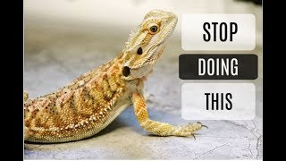 Common Bearded Dragon Care Mistakes