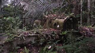 WWII aircraft in jungle outside Aitape, Papua New Guinea