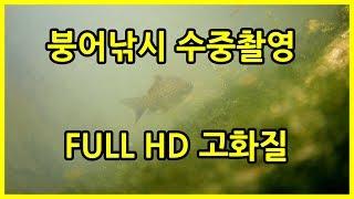 붕어낚시 수중촬영 시즌2 - 이번엔 고화질 성공 (Fishing underwater camera)