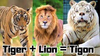 15 New Hybrid Animals Created Recently