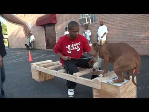 Meet the Pitbull Training Team Music Videos