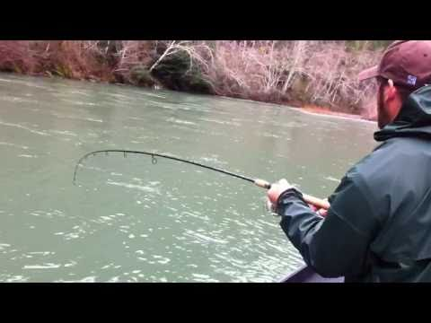Elk River steelhead fishing