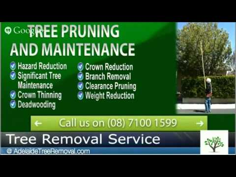 Stump Removal Service Adelaide - Call AdelaideTreeRemovalcom now at 08) 7100 1599