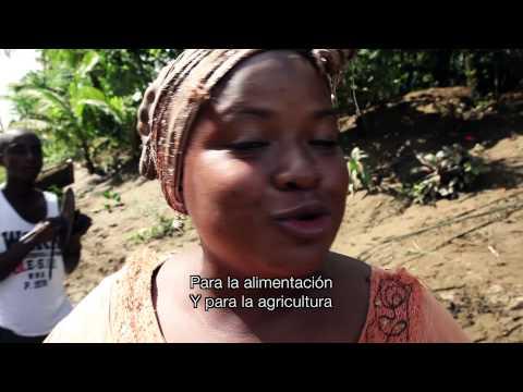 La FAO en Munguidó: Gestionando el riesgo agroclimático