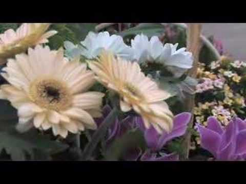 Flower Arrangements Video