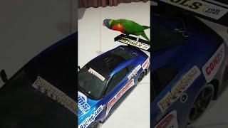 Bird Rides RC Car || ViralHog
