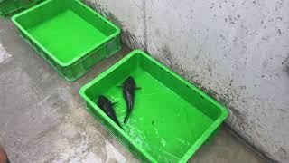 筍殻魚這裡最好吃!台南鹽水泓澤生態園區