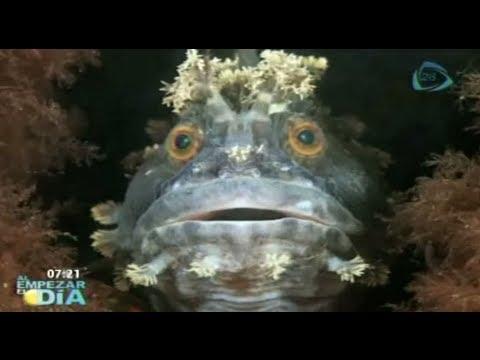 Increíbles fotográficas que muestran la vida en el mar// Los animales más extraños del mar