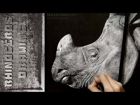 Rhinoceros - Drawing ᴴᴰ