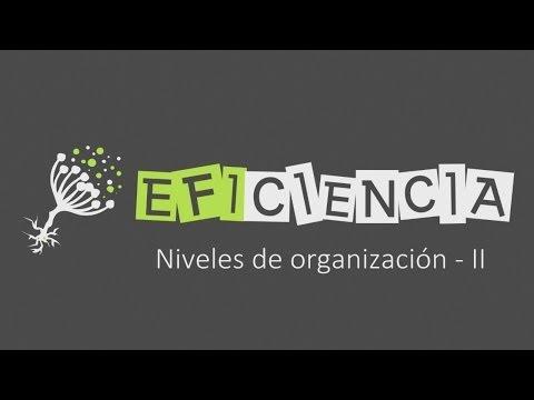 SERES VIVOS: NIVELES DE ORGANIZACIÓN - II. De Átomo a Célula Individuo Ecosistema...