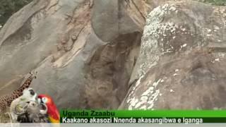 Uganda Zzaabu akasozi Nnenda