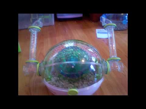 How to Build the Habitrail OVO Dwarf Hamster Habitat (Habitrail OVO Suite)