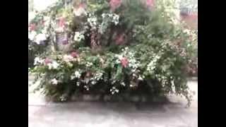 Flores arbustos y hojas