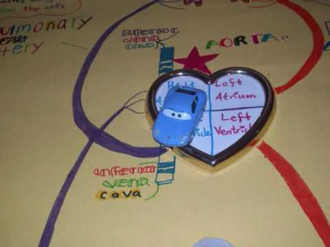 Biology Project Circulatory