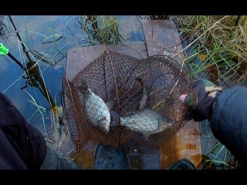 видео ловля на манку